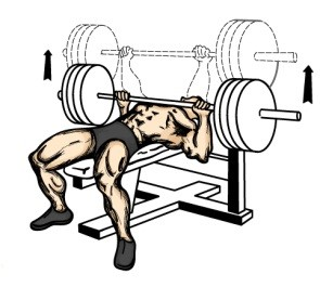 Bench Press: Ensure transition onto bench is done with hip hinge; able to manage entire movement without arching low back or curling upper torso;   Use two free weights (or theraband), not a barbell
